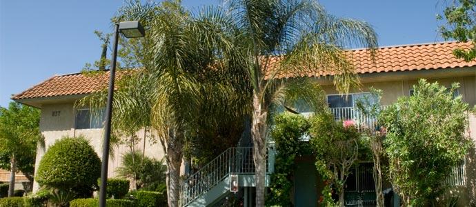 Los Arboles Apartments Picture 4